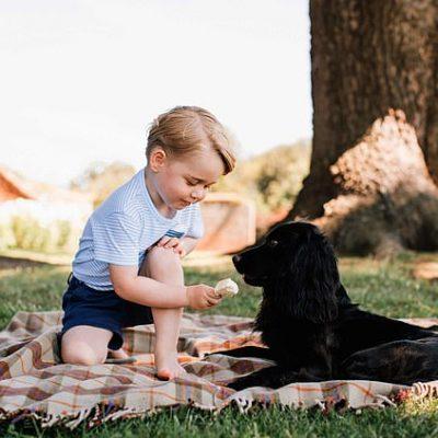 Дете храни кученце