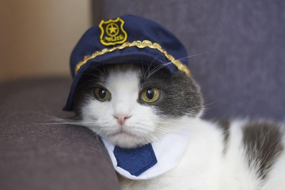 Котка полицай