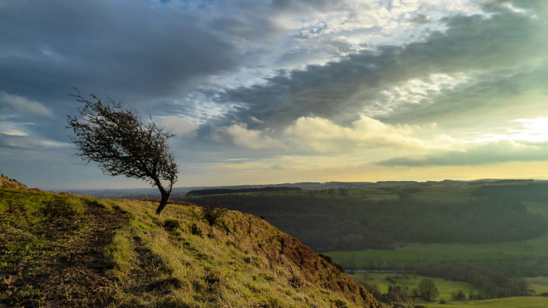 A winter tree battered by the the winds on an edge above the Swaledale valley in the Yorkshire Dales